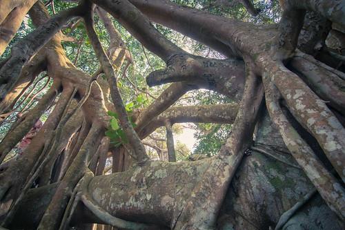 ramkhamhaeng national park - thailande 28