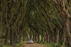 Dark hedges (Norfolk style) (crafty1tutu (Ann)) Tags: travel holiday 2017 unitedkingdom uk england norfolk wellsnextthesea trees avenue crafty1tutu canon5dmkiii canon24105lserieslens anncameron