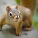 Begging+Squirrel