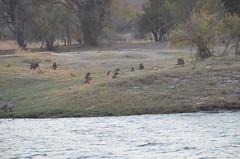 Sudáfrica - Rio Zambeze (eduiturri) Tags: sudáfrica ríozambeze
