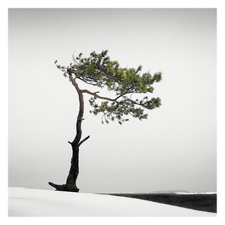 Veterans' Tree IV