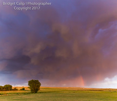 Ominous Rainbow Eastern Plains of Colorado (Bridget Calip - Alluring Images) Tags: adamscounty alluringimagescolorado bridgetcalip colorado dramaticskies easternplains sunflowersrainbow downdraft dramaticlight dusk goldenlight lonetree monsoon stormclouds