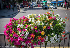 Flowers To Shop By (M C Smith) Tags: flowers shopping pentax k3ii white pink yellow red road lines traffic shops bus postbox trafficlights people pavement railings