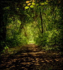 Light of the Solar Eclipse (JDS Fine Art Photography) Tags: light illumination nature trees path pathway naturalbeauty naturesbeauty inspirational green forest beauty woods