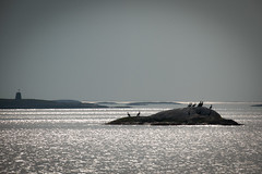 Cormorants having a rest. (leffi333) Tags: dønna helgeland norway