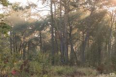 DN9A0277 (Josette Veltman) Tags: photowalk photowalkzwolle wezepse heide gelderland natuur paars landschap heather landscape nature group sun summer zomer wezep vitens
