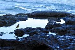 IMG_5123 (Jow Barreto) Tags: torres praia rs verão natureza mar pordosol sea nature beach bird pássaro