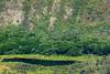 Waipio Lookout-20170828-IMG_2371-20170828.jpg (gsbasilio) Tags: hawaii waipio lookout big island bigisland waipiolookout usa