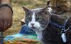 IMG_2426 (kz1000ps) Tags: boston massachusetts bostoncommon common park cats kitties kittens felines caturday purr catcafe brighton humane society adoptions oscarthewilde