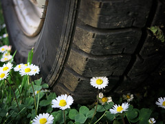 195/65 R15 (LukaBoban) Tags: trava grass detail wheel tire flower nature scene close canon powershot g15
