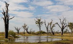 Paradise Pools, Moremi Game Reserve, Botswana (donnatopham) Tags: campxanakaxa botswana