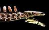 Spinosaurus (gianclaudio.curia) Tags: museo londra dinosauro digitale d7100 nikkor1685 nikon