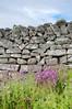 DSC_6948 (artsynancy) Tags: shetlandislandsuklerwick shetlandislands uk lerwick stonewalls stonewall stone wall flowers purple flower wildflowers