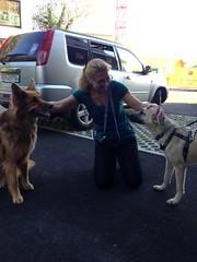 Foto 3 (citydogs4streetdogs) Tags: tans tansy