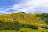 IMG_7998 (Rj Wu) Tags: 台灣 台東 池上 六十石山 金針花 花東縱谷 夕陽 黃昏 雲 天空 山 山谷 植物 太陽 耶穌光 斜射光 霞光 風景 藍天 白雲