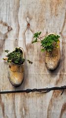 Plant shoes (Sukiraman Manivannan) Tags: shoe plant zaandam europe amsterd old tradition wood green