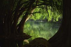 ESCONDIDO. (NIKONIANO) Tags: green verde camécuaro méxico lago agua surreal lagos tangancícuaro nikoniano sergioalfaroromero tree árbol sabino ahuehuete mexicano