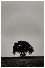 Tree (PeskyMesky) Tags: aberdeenshire potterton tree silhouette scotland flickr minimal