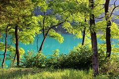 Lago di Auronzo (stgio) Tags: verde lago sfumature colore natura green lake nature summer controluce bosco auronzo dolomiti