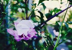 Origami Elephant (laura.pisch) Tags: flower nature natur blüte blume elefant elephant origami