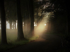 A foggy start of the Sunday (joeke pieters) Tags: 1350922 panasonicdmcfz150 woold winterswijk achterhoek gelderland nederland netherlands holland landschap landscape landschaft paysage licht light zonnestraal sunrays mist fog