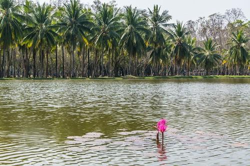 sukhothai - thailande 77