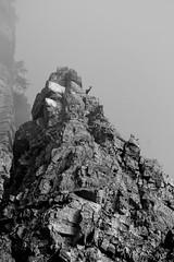 Observation et prudence_Chamois (MARTIN FRED) Tags: mercantour nikon montagne lens nikon70200f28 sigma150600sport samyang1428 montains landscapephotographs nautre marmotte lac river torrent ciel faune flore chevreuil cervidés aigle vautour faons chamois papillons flowers arraigné paysage bume brouillardbrumeuxbrume chaine de panorama