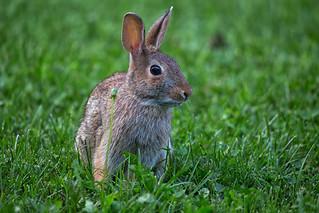 Backyard visitor