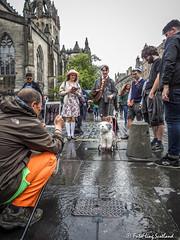 Dog Shooting (FotoFling Scotland) Tags: edinburgh edinburghfestival camera shooter street toydog
