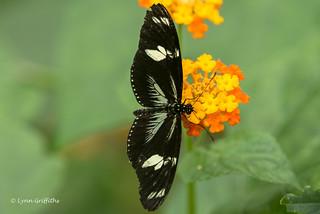 Butterfly - The Doris D75_9623.jpg