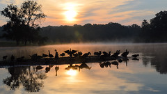 Sunrise at the Lake (jwroach) Tags: sunrise water reflection geese spread wings hudson springs park orange blue white soar day motivational