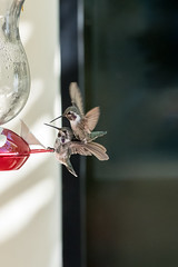 """""""Get off my back, man!"""" (Jazzie's Dad) Tags: hummers hummingbirds birds feeders antics aggression"""