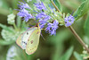 DSC_6633 dog face butterfly (dllarson2009) Tags: kansas bakerwetlands