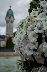 Macro Limoges Station (paulgarciaphoto) Tags: france french gare limoges fleur flower water new paulgarciaphoto monument station white