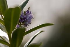 Flower (Crisp-13) Tags: flower macro leaf green