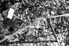 (Feininger's Cat (Thanks for 1.3 million views!)) Tags: meinfilmlab leica film ilforddelta100 bessar3m summaritm50mmf24 50mmffequiv still bs blackandwhite analog fullframe leicasummaritm12450 summarit summarit50 50mm leicam rangefinder messsucher