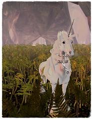 Albion (Arya Spires-Dillion) Tags: firestorm secondlife secondlife:region=midholm secondlife:parcel=midholm secondlife:x=88 secondlife:y=78 secondlife:z=23 roleplay dragons fae mermaid bard wolfs orcs elves dwarfs unicon mystics vampires magic