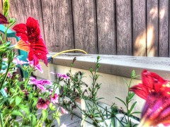 2017-09-21 15.27.19 (74prof) Tags: hdr mushrooms flowers fall facetime