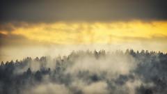 Daybreak (der_peste) Tags: fog foggy mist misty dawn daybreak dawning sunrise sunset clouds forest trees treescape forestscape bayrischerwald bavaria bayern germany deutschland