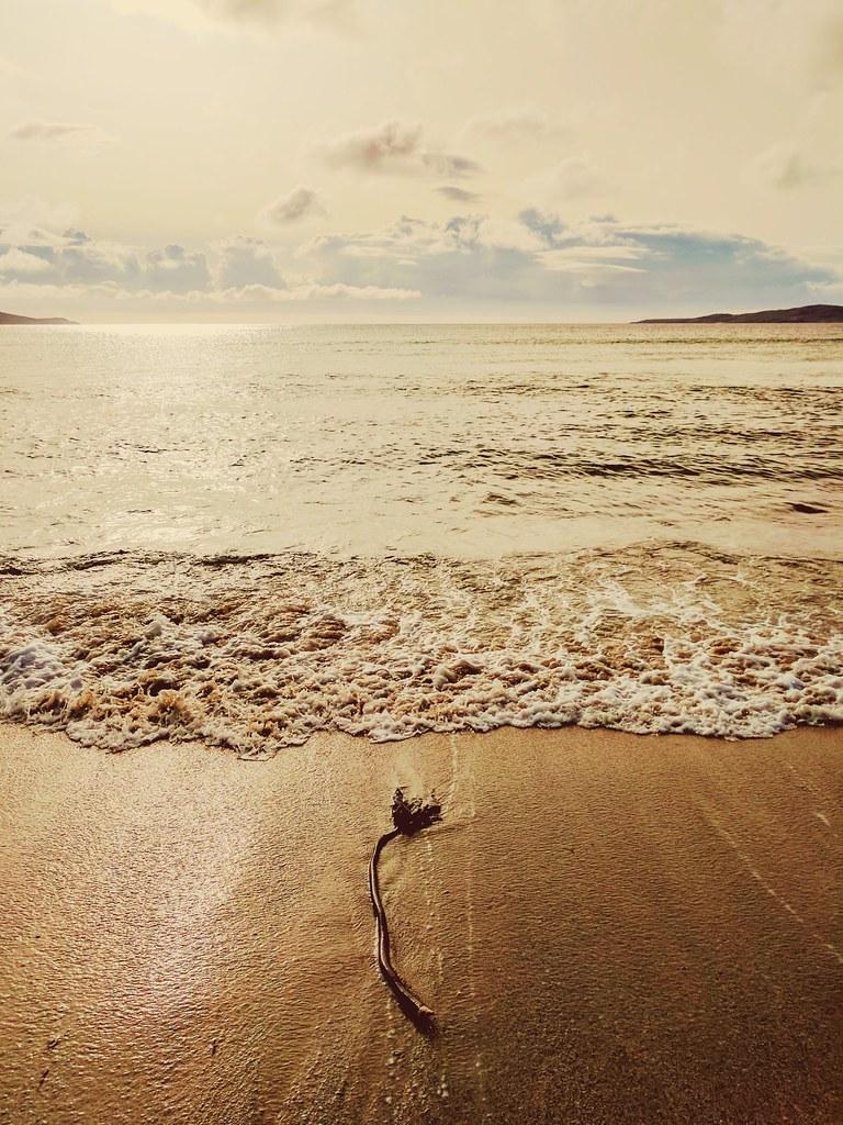 Solitary Seaweed.