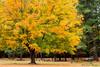 Autumn at Greeley Park, Nashua,NH. (salomie2) Tags: greelypark nashua newhampshire new hampshire greeley park autumn