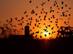 Atardecer (Antonio Goya) Tags: sunset sun atardecer silouettes siluetas backlight contraluz roden zaragoza españa spain orange naranja nature naturaleza olympus micro43 omd dng xataca dzoom