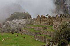 Morning Mist at Machu Picchu (donnatopham) Tags: machupichu