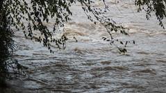 UW110072.jpg (jramspott) Tags: georgia storm river nature water chattahoochee atlanta rain tropicalstorm irma