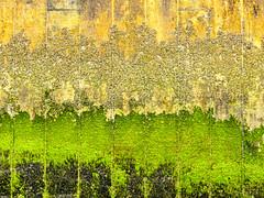 Low Tide Textures (FotoGrazio) Tags: waynegrazio waynesgrazio algae art artofnature barnacles closeup color colorful composition fineart fotograzio green lowtide marinelife nature painterly pattern phototopainting scum texture textures yellow