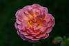 Arboretum-09410-Edit.jpg (Dr. JS Photography) Tags: graden newjersey color flower summit bloom reevesreedarboretum arboretum landscape