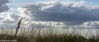 Grasses & Clouds
