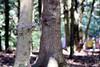 Un pti jaune et bleu (FranSight) Tags: fransight france fran flickr facebook amnéville amneville zoo animaux animalier photographieanimalière animal canon 100mm wild sauvage franimage de fr parc zoologique eos70d eos photo image picture journée sortie faune beau lorraine est nord 2017 lamontagnedessinges la montagne des singes macaque barbarie singe alsace kintzheim magot afrique du gibralta moineau