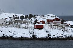 IMG_2584 (alessandro orfanù) Tags: norway lofoten vesteralen hurtigruten winter snow northernlight