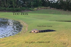 Florida Golf (robert (Bobby)powell) Tags: bonitaspringsfl southwestflorida leecountyfl wildlife florida robertbobbypowell posted americanalligator golf fairwaysandgreens native imagesofbing imagesofaol rpowell naturephotographer gators yahooimagesofflorida leecounty hurricane hurricaneirma teebox floridagolf floridaimages stateprotected notendangered water animal landscape federalprotection grass urban heartawards